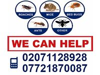 100% Guarantee! Pest Bed Bugs Cockroach Rodents Mice Treatment Elimination Tottenham Camden Edmonton