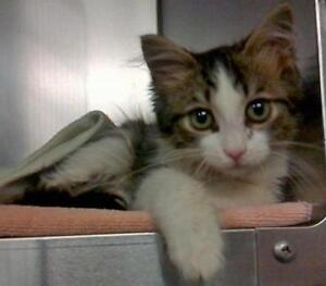 Homeless Cats for Adoption, Help Save a Life!!