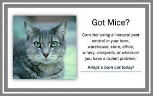Barn Homes Wanted for Cats