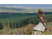 Need a short break? Volunteers needed for 3 days of Raptor spotting. 8th or 9th to 12th May.