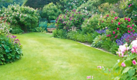 CALL TEXT 289 237 9994 FOR FAST GRASS CUTTING LAWN MAINTENANCE