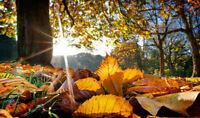 Winterize your garden today!