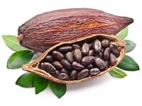 High Quality Cacao Products Online