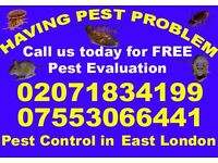 Getting rid of, Pest Control- Bed bugs, Mice,Ants,Flea,Fly- East Ham,Forest Gate,Manor & Upton Park