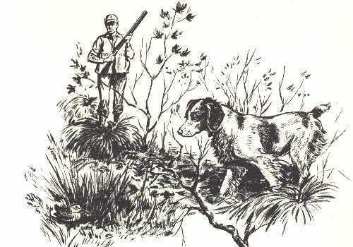 BRITTANY SPANIEL - 1964 Dog Art Print - MATTED