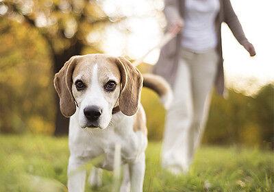 Gassi gehen mit einem süßen Vierbeiner: Mach Dir und dem Hund eine Freude. (© Thinkstock über The Digitale)