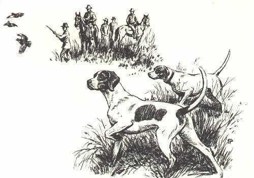 POINTER - 1964 Dog Art Print - MATTED