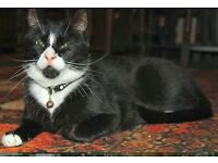 Lost Black and White Cat PALMERSVILLE NE12 Newcastle **REWARD**