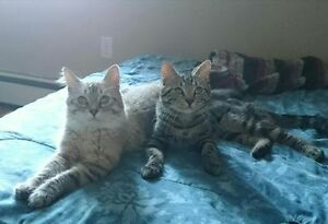 2 Yr Old Brothers Urgently Need Loving Home; Abandoned by Owners