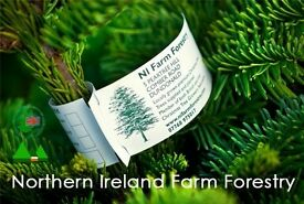 Real Christmas trees from £10, direct from grower