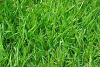 Entretien professionnel de pelouse gazon fleurs haies grass