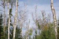 Tree felling and removal - $100/tree