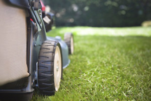 Lawn/Yard Care and Clean Up