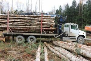 4 cords / 1/2 a bunk load of Dry Pine shorts