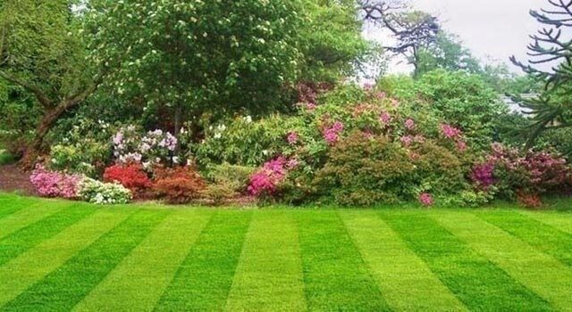Sunny Daze Garden And Landscape Co Fully Insured Best Prices In North Lanarkshire Gumtree