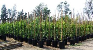 Fruit trees for Sale in Caledon