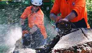 Tree Removal Sydney Residential & Commercial Green Guys Newtown Inner Sydney Preview