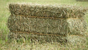 In Search of Square Bales of Hay