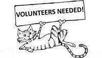 Oshawa cat adoption center volunteers needed!