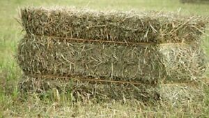 Hay for sale,small square bales