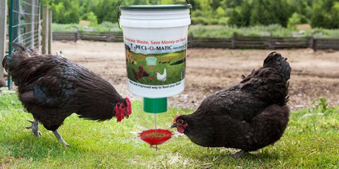 peckomatic-poultry-feeder