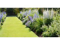 Head gardener position available. Surrey.