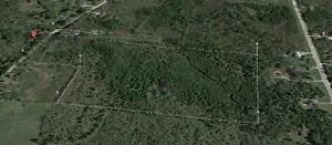 20 Acres of standing Cedars for sale