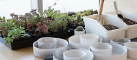 Amazing World Project: Succulents Workshop