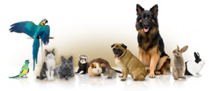 In-home Pet Care