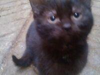 Kittens 16 weeks