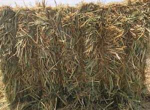 Hay for sale Helidon Lockyer Valley Preview