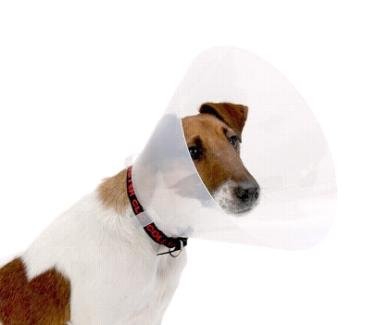 NEW Apex Snap 25cm Dog Collar