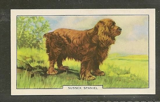 1938 UK Dog Art Full Body Study Gallaher Series B Cigarette Card SUSSEX SPANIEL