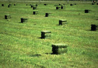 2015 First Cut Hay Small Squares