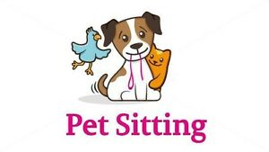 Experienced dog sitter !