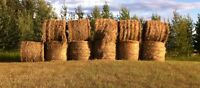 11 Round Bales for Sale. 25 Mins West of Grande Praire