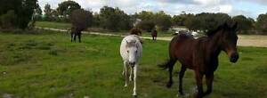 Horse Agistment Wanneroo Wanneroo Wanneroo Area Preview