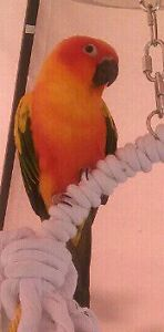 - $650  for Sun Conure and cages.