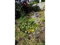 Garden Pond Surround / small pools and rockery.