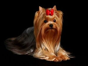 Amazing dog grooming Absolutely best deal in town