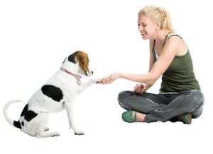 Dog Training Classes @ Little Paws Inn