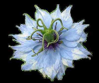 www.ebay.com.au/itm/221896652892