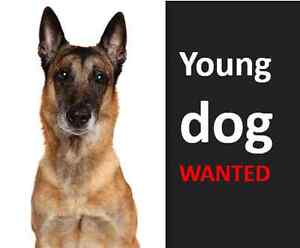 Looking to adopt a puppy or a young dog