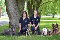 Académie canine St-hyacinthe