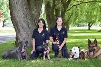 Pension pour chiens a st-Hyacinthe