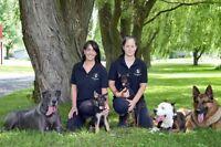 Pension pour chiens -St-hyacinthe