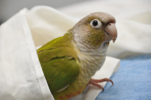 ❤️⭐❤️Conure⭐Babies with Cage❤️⭐❤️