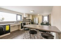 Ensuite Student Room in Private Halls - available immediately