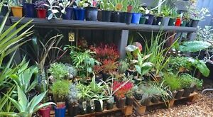 BIGGEST PLANT SALE YET!!! Huntfield Heights Morphett Vale Area Preview