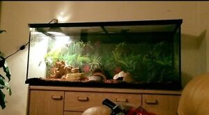 Large 120 Gallon Tank with all necessities